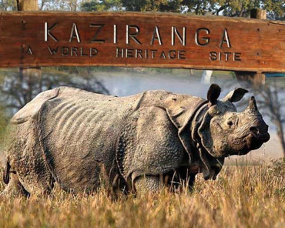 Kaziranga National Park | AlightIndia